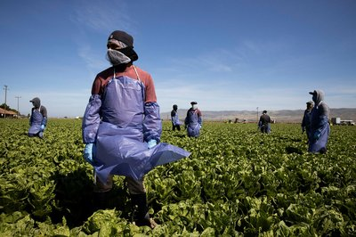 FARM_why_sustainable_food_could_mean_a_better_deal_for_workers_4.jpg