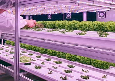 Food_Revolution_Article_Vertical_Farming_Hero.jpg